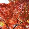 韓国でも紅葉は一緒ニダ-05