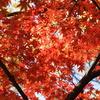 韓国でも紅葉は一緒ニダ-06