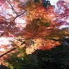 会津の紅葉04