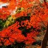 小石川後楽園の紅葉9