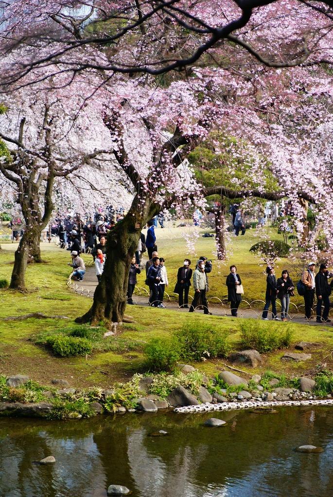 桜を興じる人たち