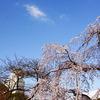 空の青と白の桜