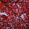 韓国でも紅葉は一緒ニダ-08