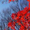 小石川後楽園の紅葉3