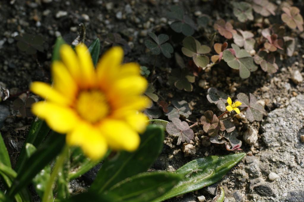 小さな花たち2