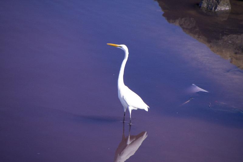 白鷺、立つ