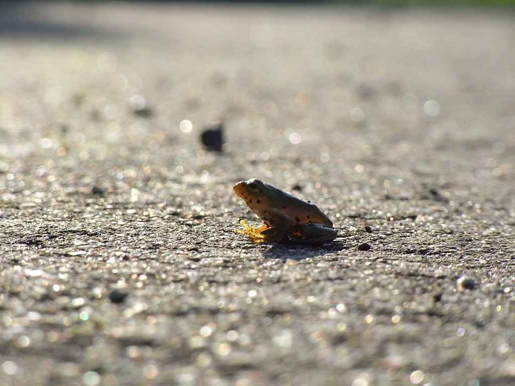 Frog_004