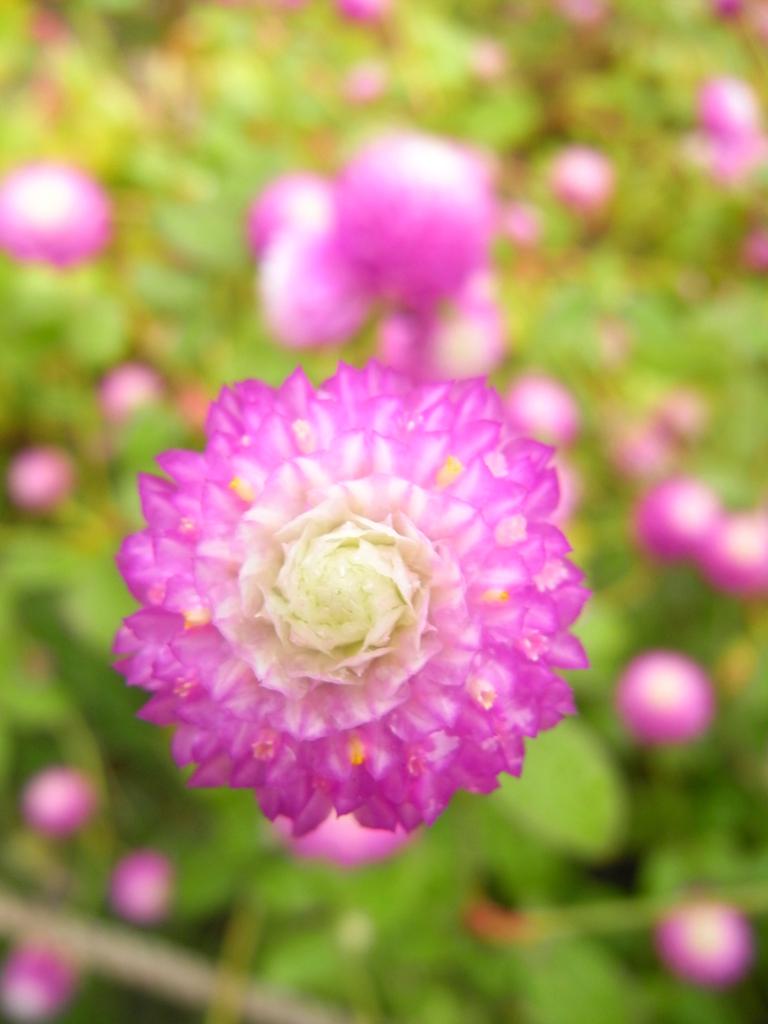 flower_008