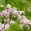 flower_013