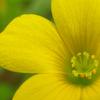 flower_012