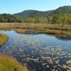 尾瀬が原 秋の池塘