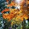桜山公園、散歩。 - Photomatix in use.