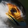 僕は動物界脊索物門鳥綱タカ目ヘビクイワシ科ヘビクイワシ属に分類される鳥なんだよ!
