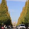 神宮外苑の紅葉だけど・・・まだまだかな~(^。^)y-.。o○