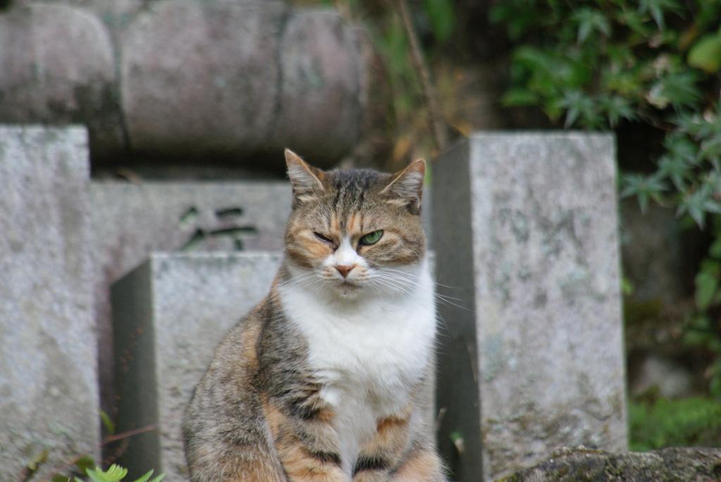 悪そうな猫
