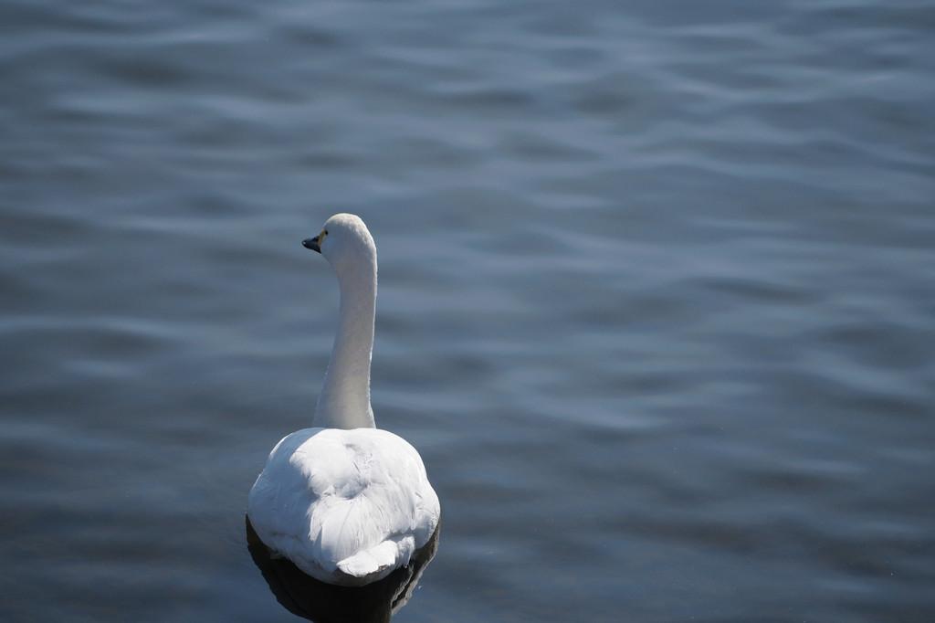 諏訪湖半にて1