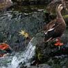 2010紅葉狩り ~動と静2~