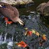 2010紅葉狩り ~動と静1~