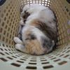 Basket_Ⅱ