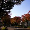 街角の彩り