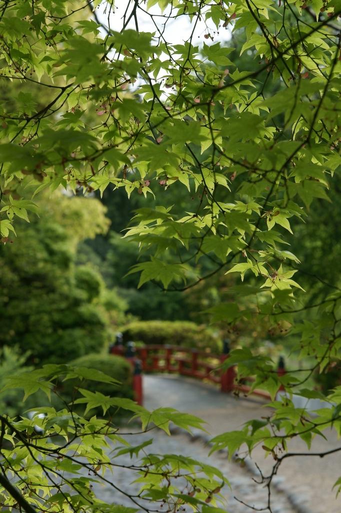 春日大社 萬葉植物園
