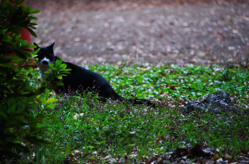 Cat , interupted