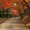 秋のトンネル