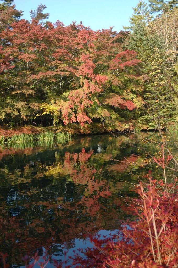 雲場池の秋