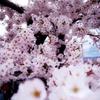 五稜郭公園 函館