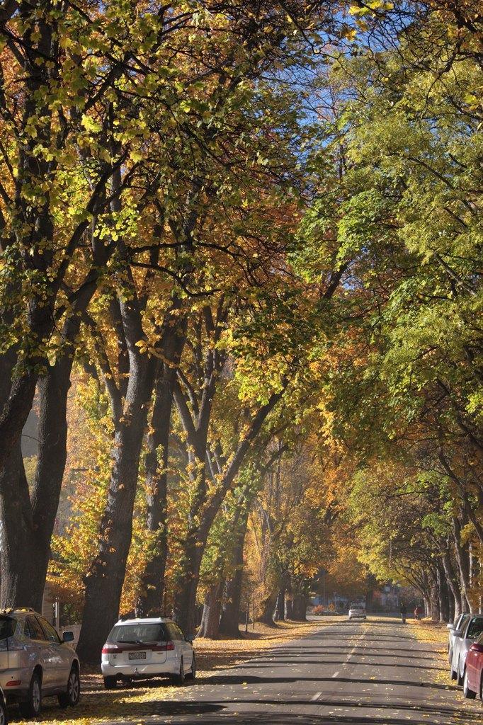 アロータウンの秋
