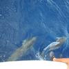 イルカの背中