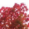 信州の紅葉