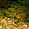 川面の新緑