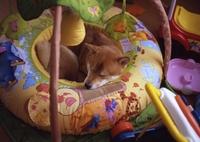 MAMIYA M645 1000Sで撮影した動物(おもちゃに囲まれて)の写真(画像)