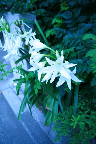 white and bright