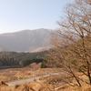 棚田を望む桂の木