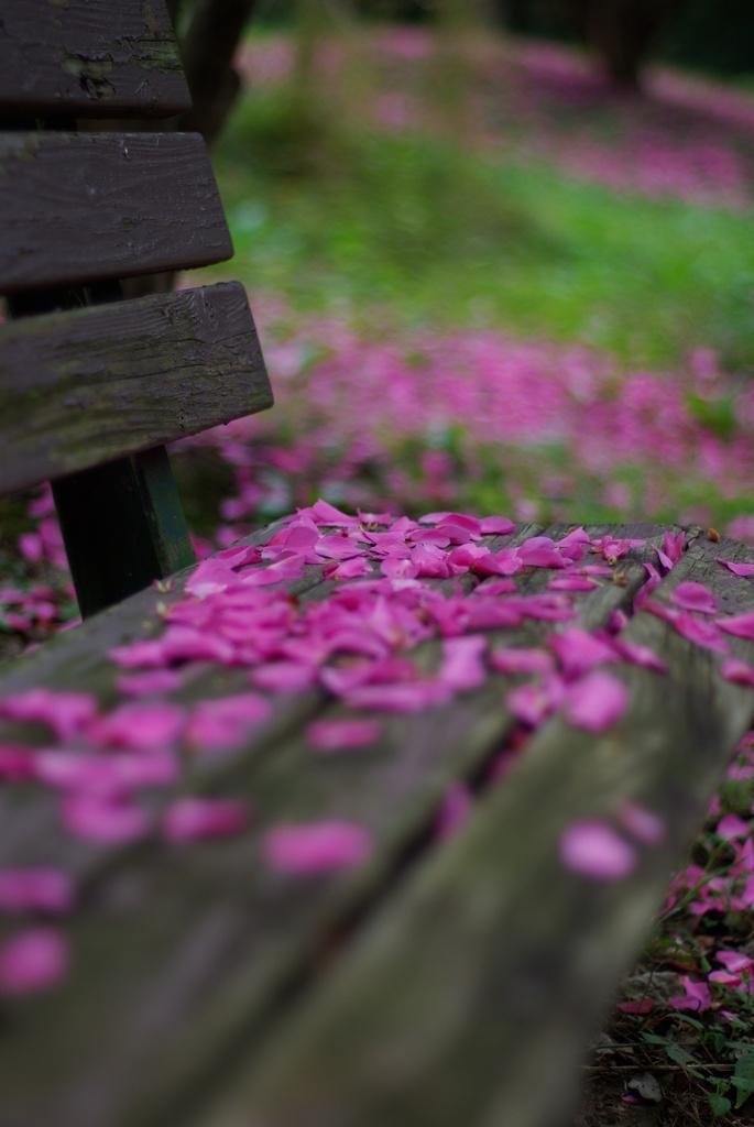 花びらのベンチ