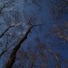 木立と青空