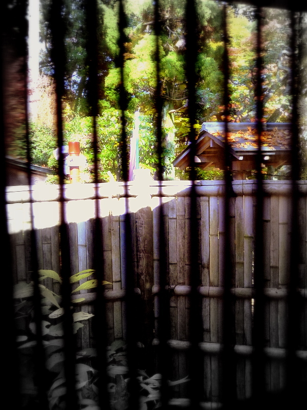 shade of the bamboo