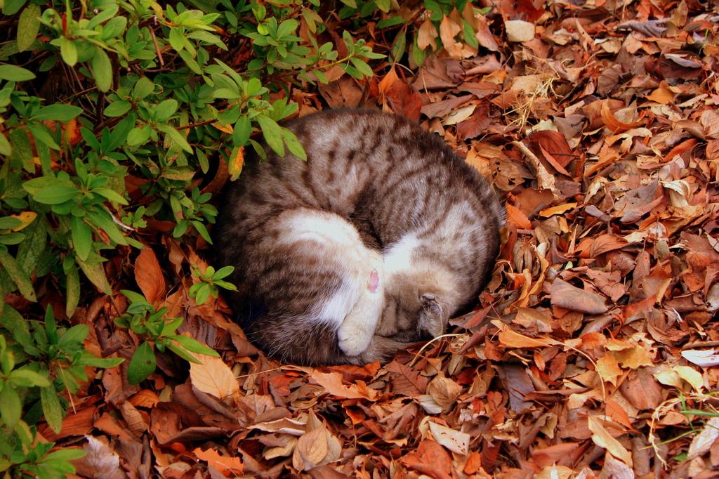 猫は落ち葉で丸くなる!