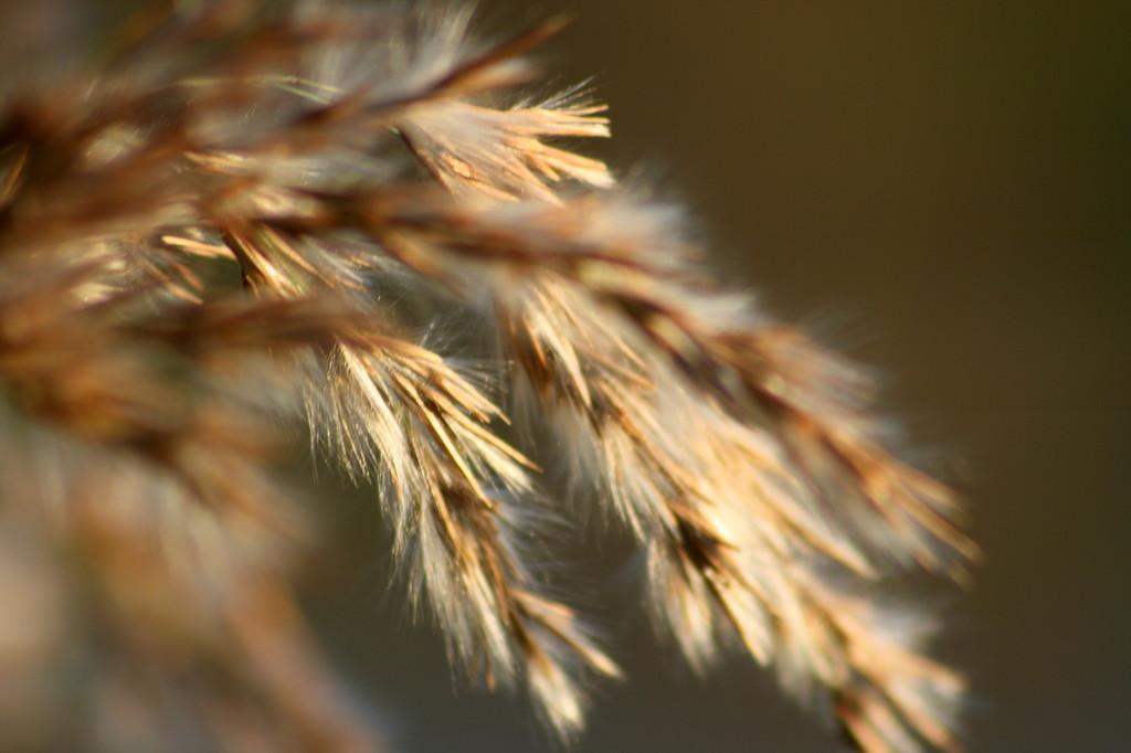 A coat of hair