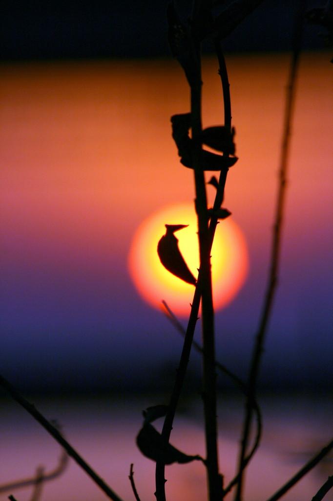 A sunrise2