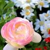 みなさま春でございます。