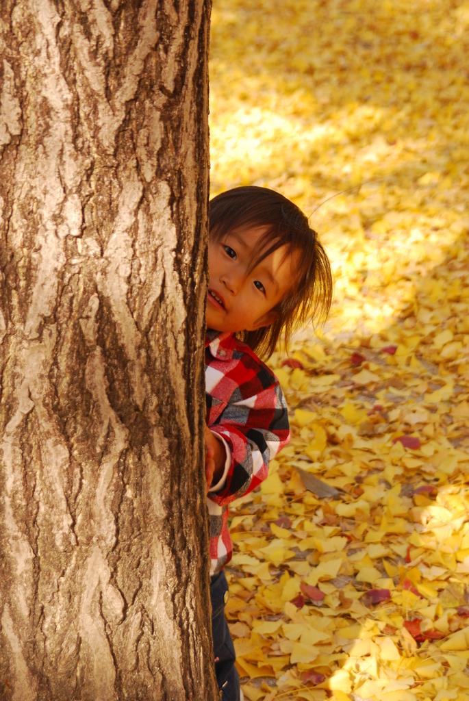 小さい秋ここだよ