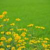 畦に咲く花