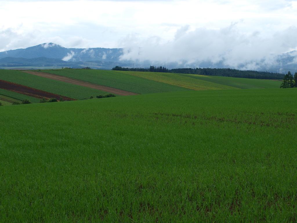 雨上がりの丘
