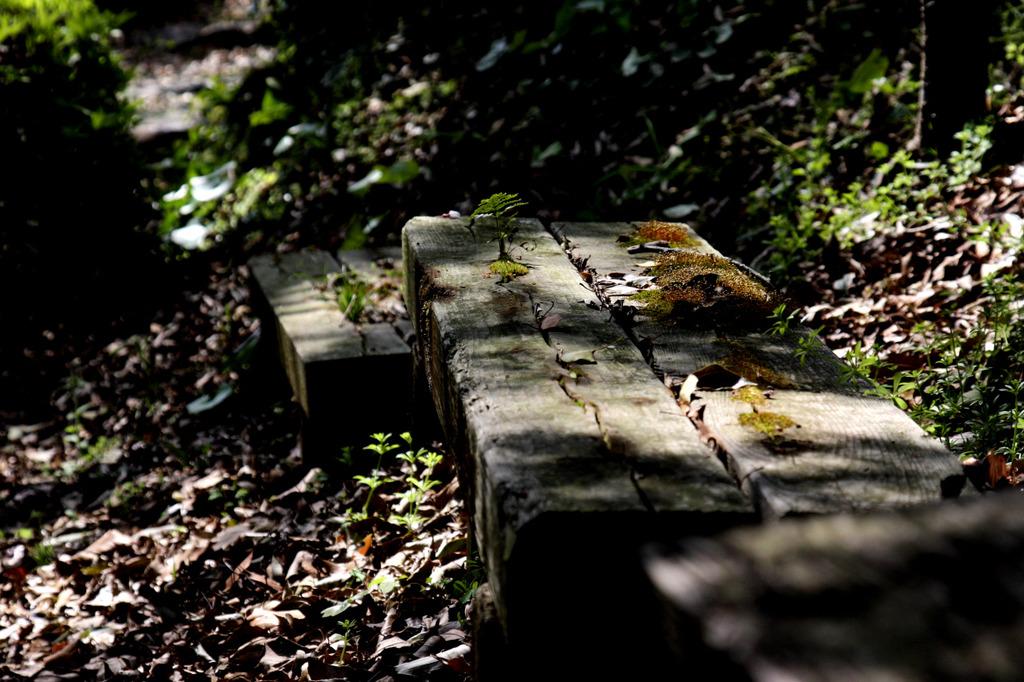 時に埋もれるベンチ
