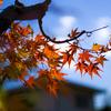 秋のさんぽ