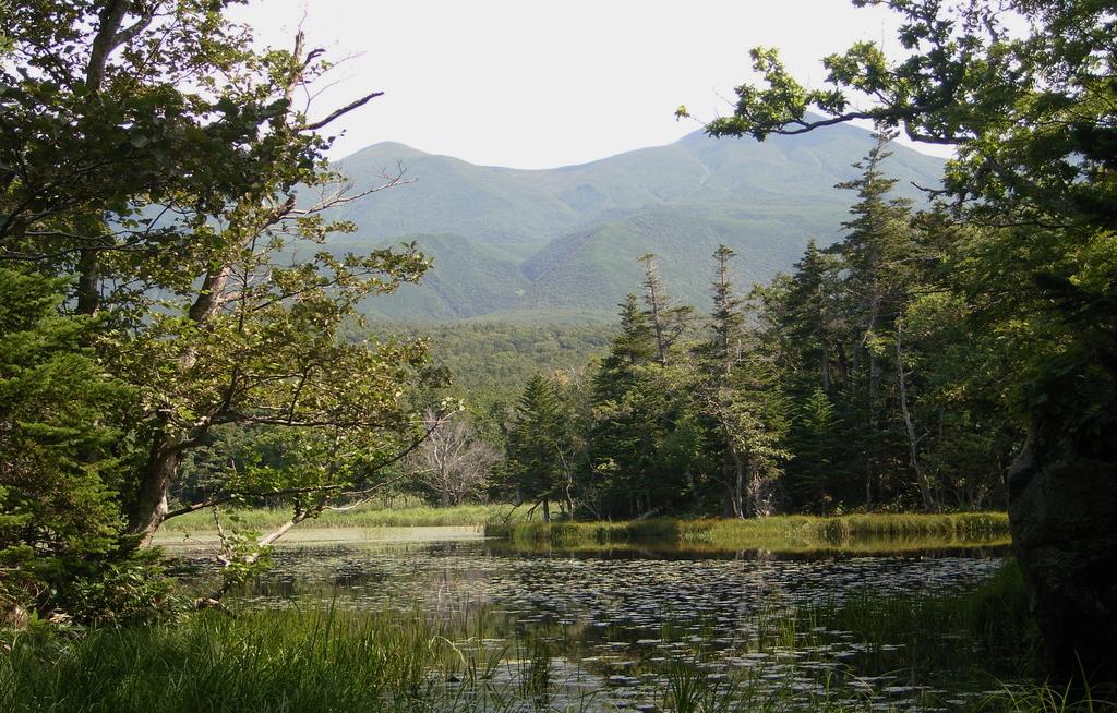 緑に包まれた湖