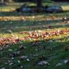 昼過ぎの落ち葉
